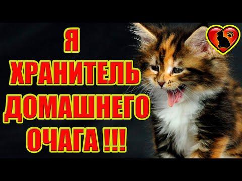 Трехцветная Кошка Лучший Оберег Для Дома и Семьи!