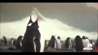 Cartografía - Antártida