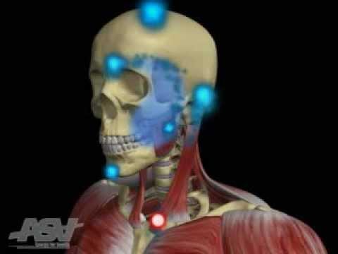 Cranio Facial Pain