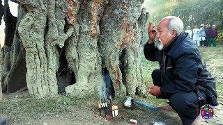 Prayer Of Sati Banyan Tree (A God Tree) - Sati Khongnang Khurumba