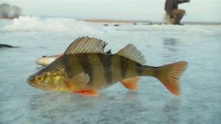 Все о зимней рыбалки на окуней
