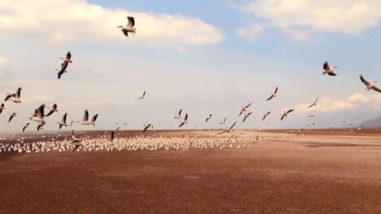 Tansania: Lake Manjara (1:10)