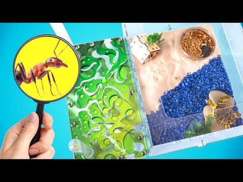 5 Tips to Make Your Ants Happy | Building a New Ant Farm!