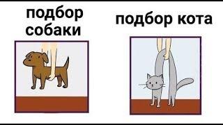 Лютые приколы. Поднять кота...