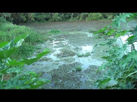 Patos Já - Reclamação Lagoa no bairro Sorriso