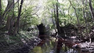 Træer langs åen