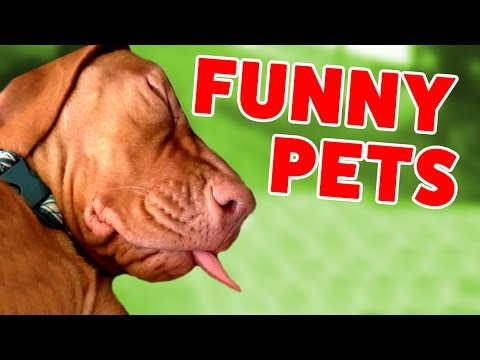 Cats On Treadmills, Zebra Closeups & More Funny Home Videos Weekly Compilation | Funny Video Pets