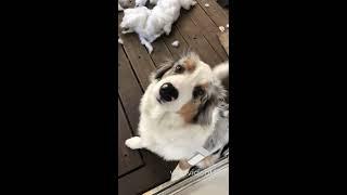 animale caine vinovat sau nevinovat