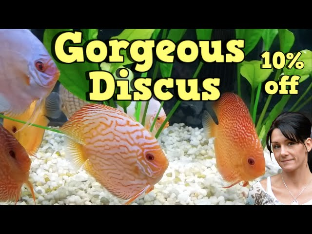 Dream Discus Tank Follow Up!! Talkin Discus Presented by KGTropicals!!