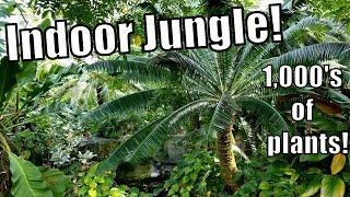 Indoor Jungle Garden Tour + Orchid & Plant Haul