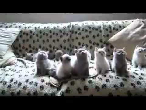 動作一致的多隻小貓