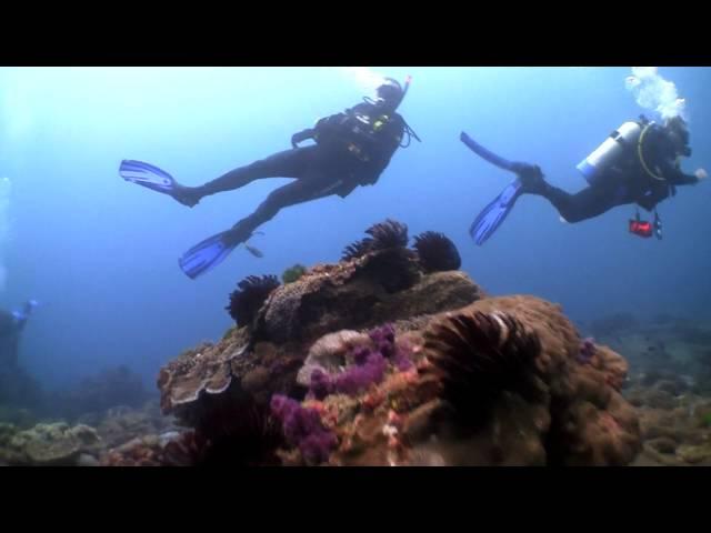 Diving at Flinders Reef, Moreton Island QLD