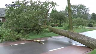 STORM! Tree cutting CodeRED Warning Netherlands STORM CODE ROOD boom zagen Vijfhuizen Nederland