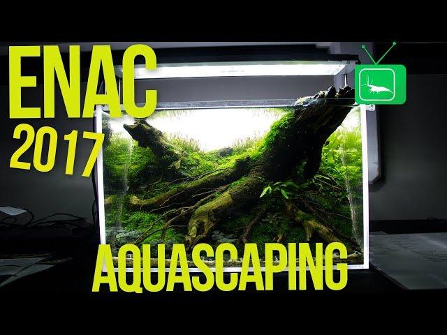 ENAC - European Nano Aquascaping Competition 2017 | Aquascaping | GarnelenTv