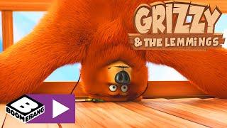 Grizzy I Lemingi | Pobrana Wiedza | Boomerang