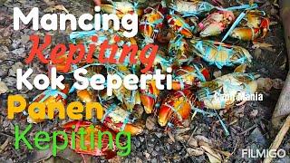 Fishing Crabs In Indonesia Wow KEREN.. Mancing Kepiting Kok Seperti Panen Kepiting