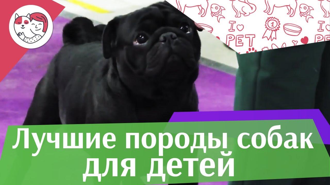 5 лучших пород собак-нянек на ilikepet
