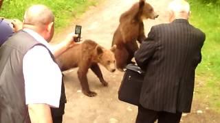 Intalnire de gradul 3 .... Lacul Sf. Ana, doi ursi si o ceata de NESS-ieni