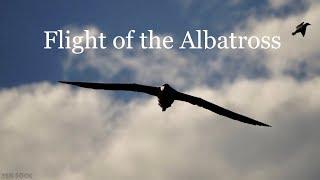 Royal Albatross. Epic flight. Whopping 11-foot wingspan.  アルバトロス альбатрос 信天翁αλμπατρός भारी अड़चन