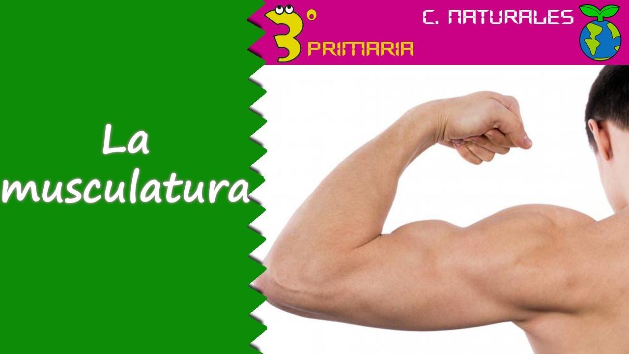 Ciencias de la Naturaleza. 3º Primaria. Tema 3. La musculatura