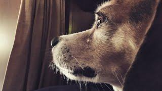 अपने मालिक के जाने के बाद 6 साल रोता रहा ये कुत्ता ! Incredible Human Animal Friendship.