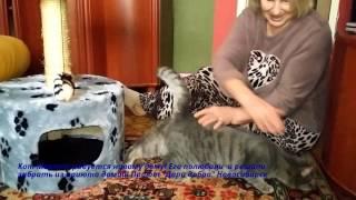 Кот радуется что его забрали домой из приюта | Приют дари добро Новосибирск