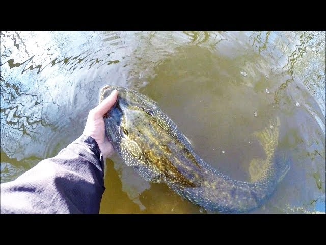 BIG Surprise! Pike Fishing SMALL Rivers