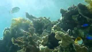 preview picture of video 'Coral Bay - Ningaloo Reef 2012'