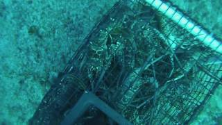 Gopro Diving Lobster