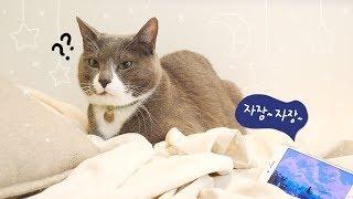 고양이 재운다는 에픽하이의 '고양이자장가'를 들려주었더니...😭😭