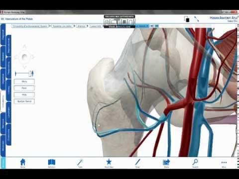 Portal etiología y la patogénesis hipertensión