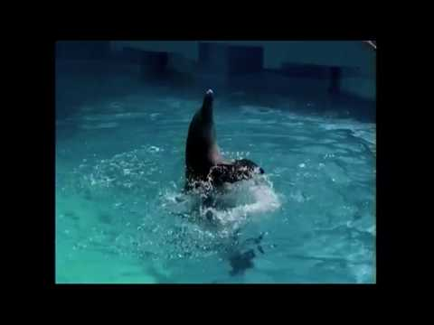 Delfinarium w Cancun – Mexico