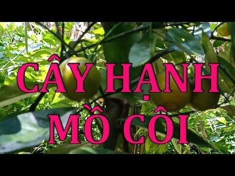 Cây Hạnh Mồ Côi - Orphan Tree ( Hạt Ngoc Vlog )