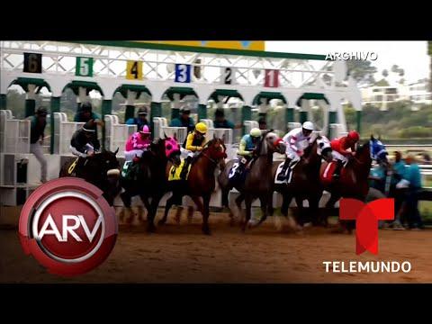 Mueren dos caballos de carrera en plena competencia | Al Rojo Vivo | Telemundo