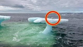 Fishermen Think They Found A Seal On A Floating Iceberg Until They Got A Closer Look