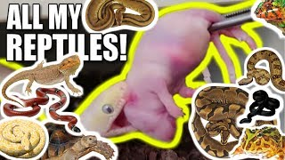 ULTIMATE SNAKE FEEDING VIDEO!! **Feeding all my Reptiles!!** Brian Barczyk