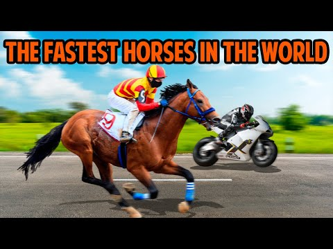 The FASTEST HORSES In The World 🐎