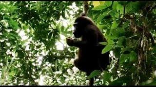 Gestion durable des forêts dans le Bassin du Congo (AFD)