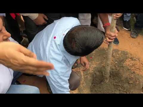 Delhi CM Arvind Kejriwal Launches the Mega Tree Plantation Drive Van Mahotsav