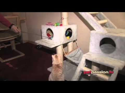 Comportamento gatti tiragraffi e cuccia