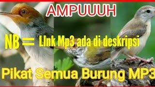 Pikat Burung MP3, Untuk Semua Burung Kutilang, Ciblek, Kolibri, Prenjak