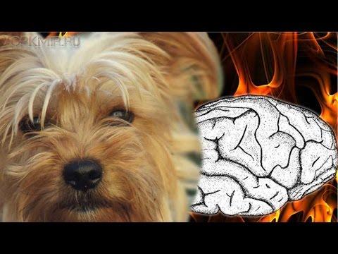 Инсульт у собак | Симптомы | Лечение | Признаки.