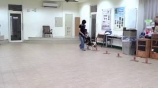 Drug Sniffing Dog Training Program Demo
