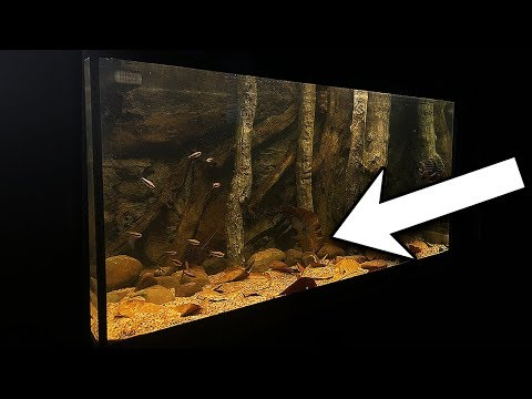 HOW TO CREATE A NATURAL AQUARIUM FOR $5