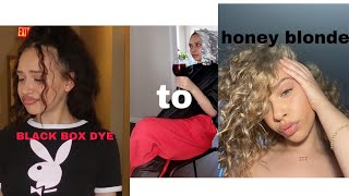 Going From Box Dyed Black Hair To Honey Blonde *bleached Blonde Hair Care Tips*