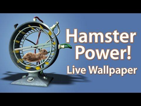 Video of Hamster Power! Live Wallpaper