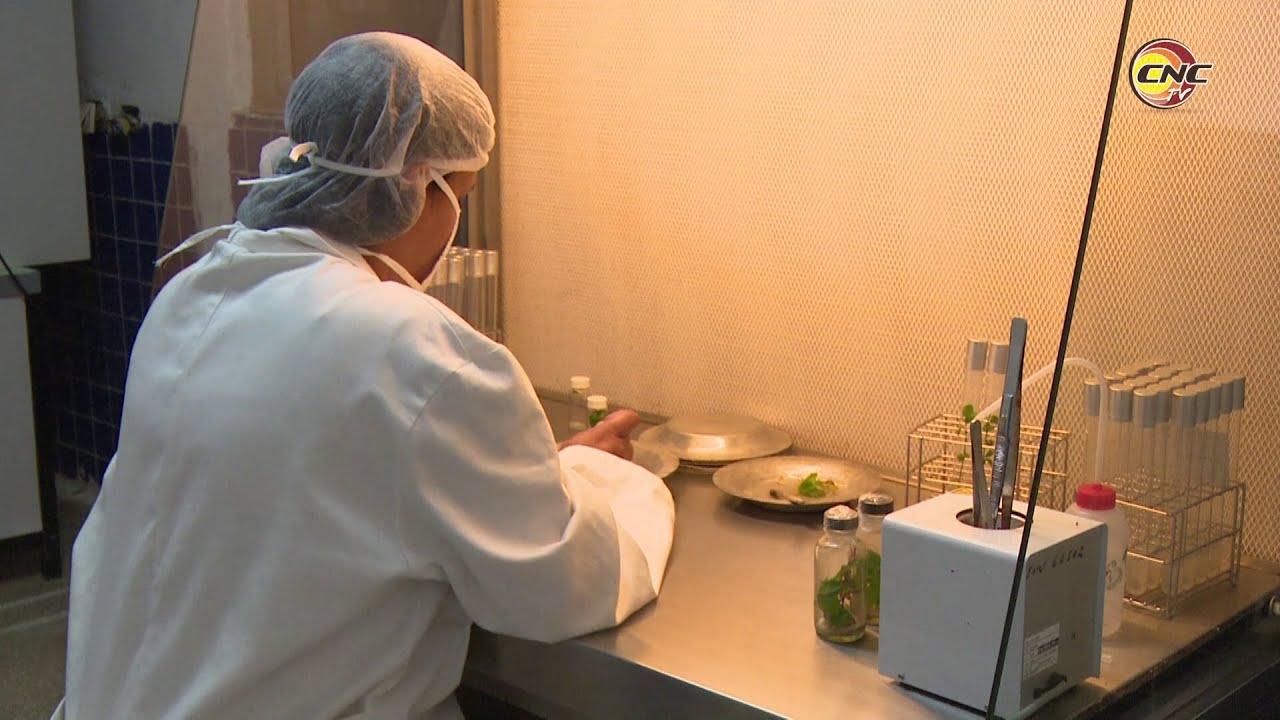 Universidad de Granma vincula investigaciones científicas a la producción de alimentos