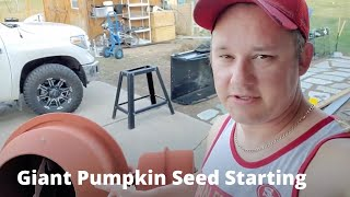 How to start your GIANT pumpkin seeds.