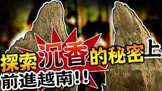 【★前進越南!!探索沉香的秘密 (上) ★連年漲的木材界黑鑽石】