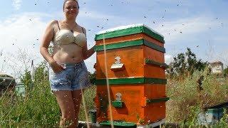 Моя жена пчеловод или душа пасики!!!